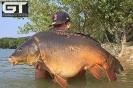 Marcel - 41lb 14oz (19kg)