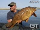 Johann - 27lb (12.2kg)